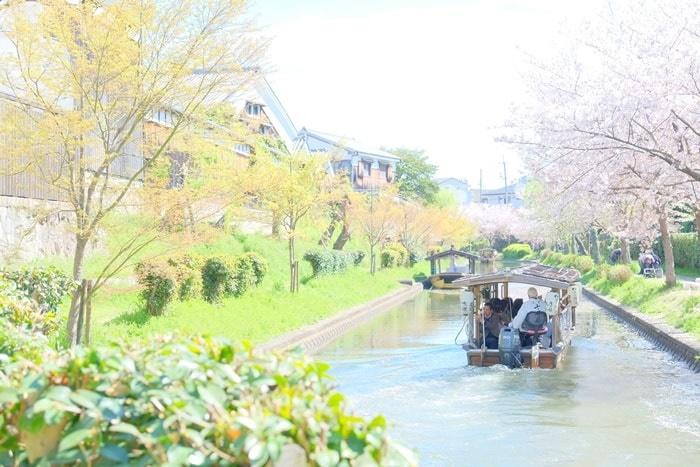 京都 桜の撮影スポット 伏見十石舟