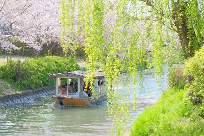 伏見十石舟周辺の桜撮影スポット 寺田屋近くの桜並木と柳