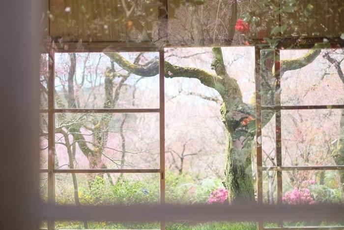 原谷苑おすすめ撮影スポット3:窓ごしの風景