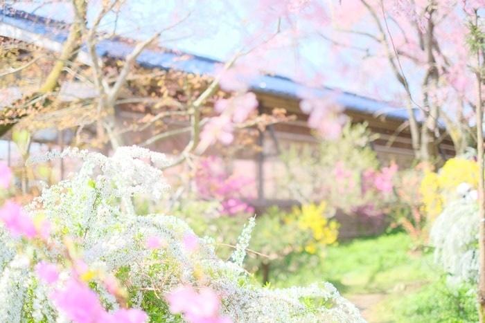 京都ノスタルジックな撮影スポット 原谷苑