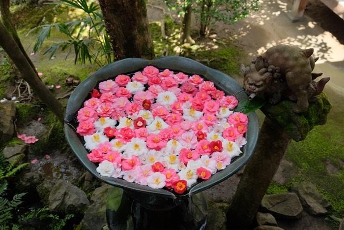 法然院の花手水に浮かぶ椿