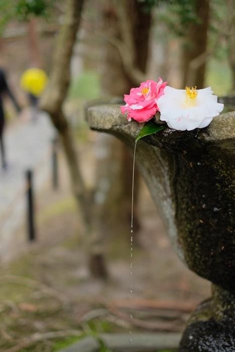 法然院 椿の撮影スポット 手水鉢