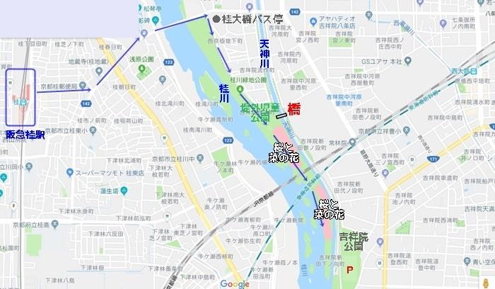 桂川の桜撮影スポットへのアクセス