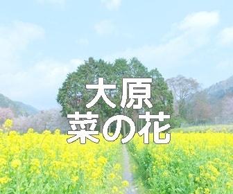 京都・菜の花の撮影スポット・大原の里