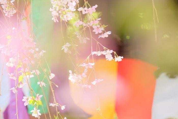 京都の桜 撮影スポット六角堂
