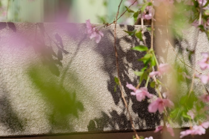 六角堂 お地蔵さんと桜の撮影スポット