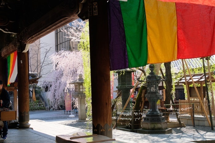 六角堂 五色幕と桜の撮影スポット