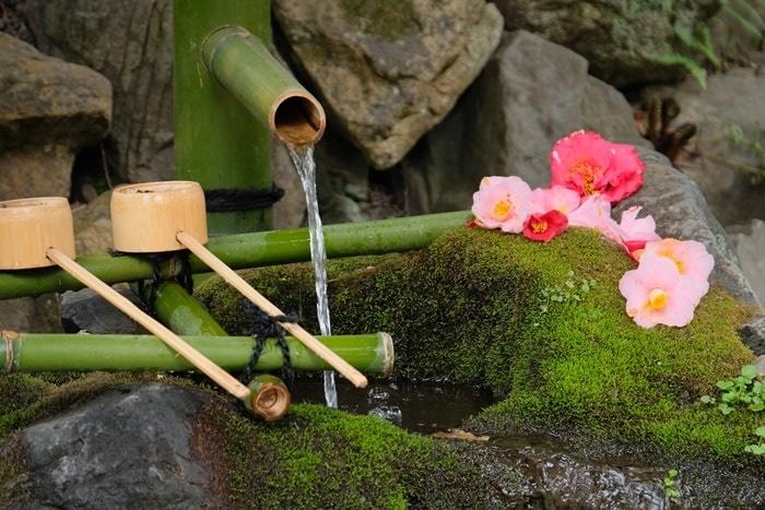 大豊神社の椿撮影スポット お手水
