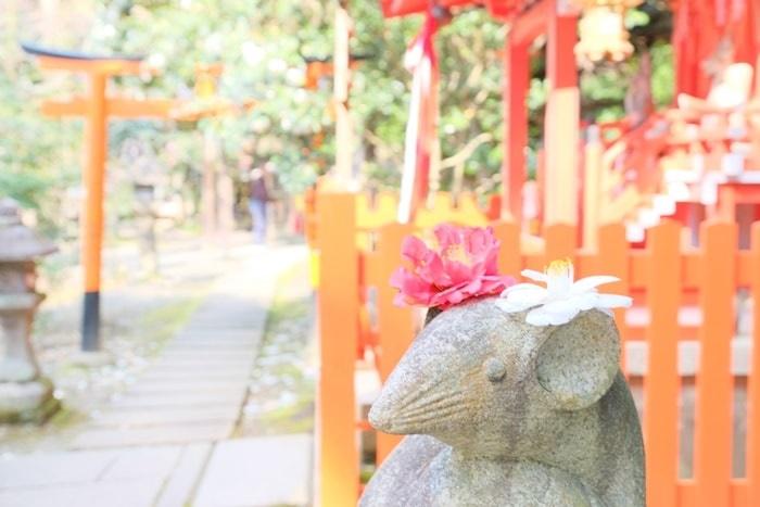 大豊神社の撮影スポット ネズミと椿