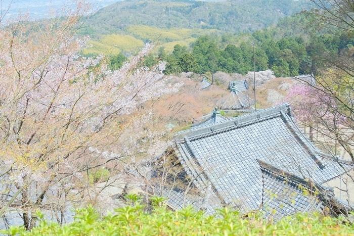 善峯寺の桜撮影スポット3:高台から見下ろす桜