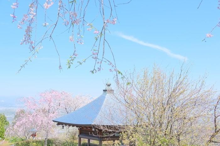 善峯寺の桜スポット