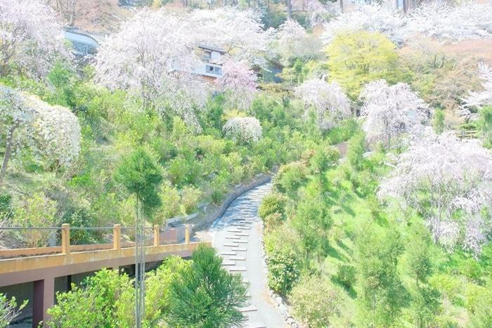 京都の桜撮影スポット 善峯寺