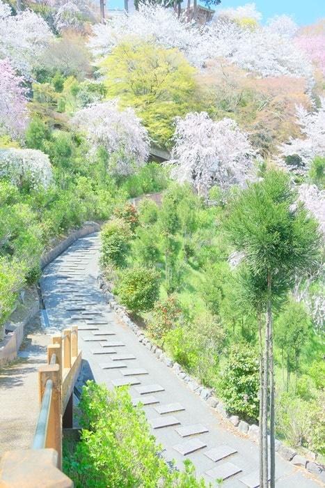 善峯寺の白山あじさい苑周辺 桜撮影スポット