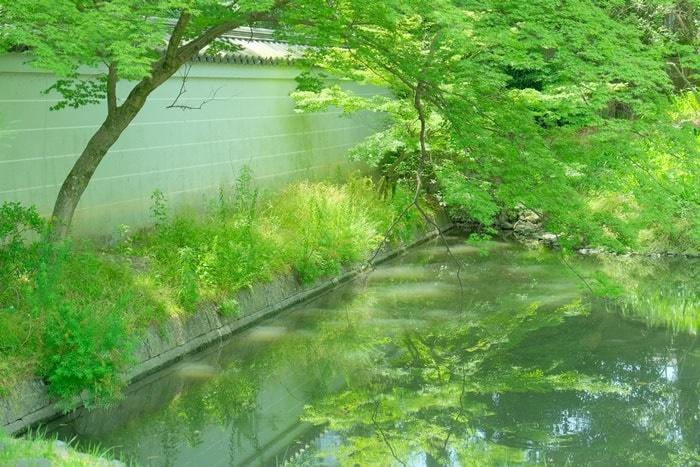 閑院宮亭跡写真撮影スポット4:庭園の新緑