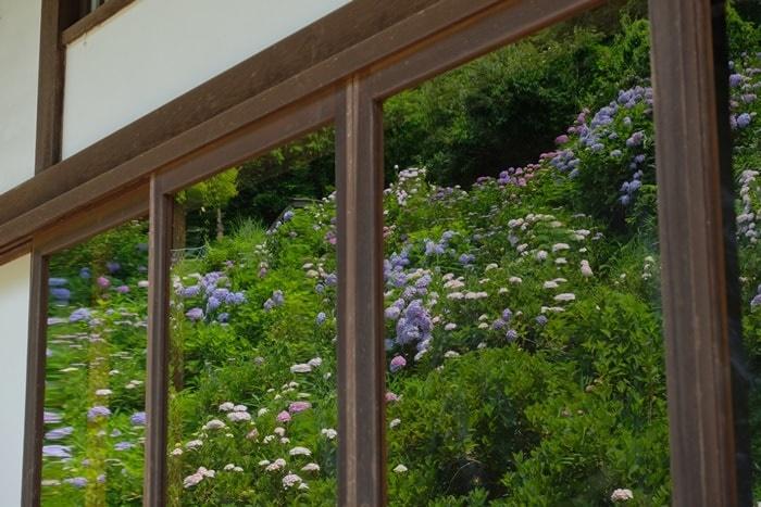 観音寺のガラスに映り込む紫陽花画像