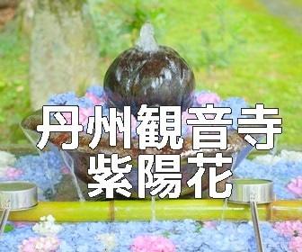京都・紫陽花の撮影スポット・観音寺