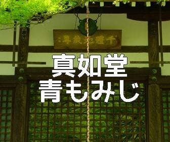 京都・青もみじと苔の撮影スポット・真如堂
