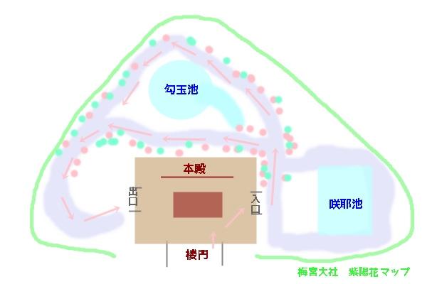 梅宮大社 紫陽花マップ