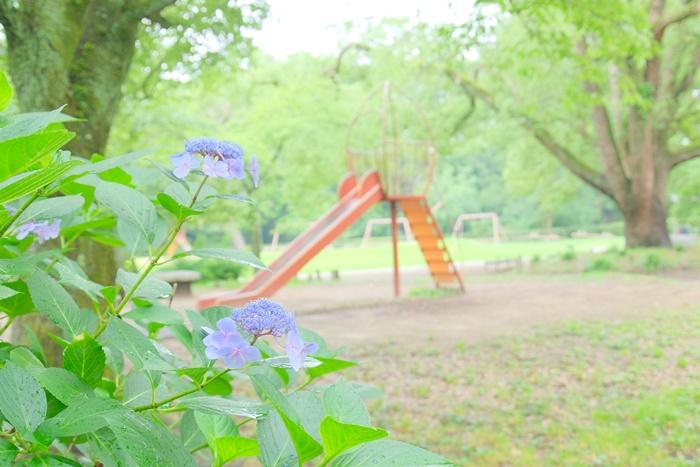 京都御苑児童公園の紫陽花写真スポット