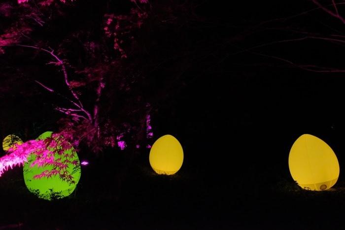 下鴨神社 糺の森の 卵の光