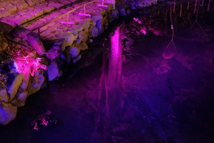 光の祭 川の水に映り込む木