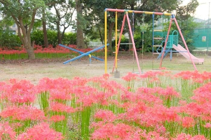 京都彼岸花の撮影スポット 若宮八幡宮