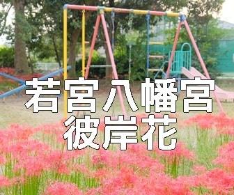 京都・彼岸花の撮影スポット 若宮八幡宮