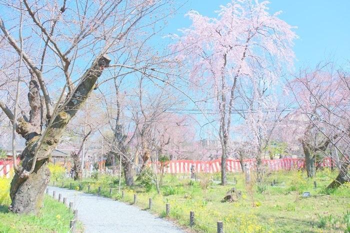 平野神社の桜苑