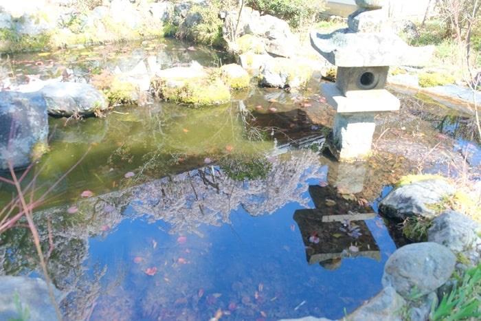 池の水に映るなりひら桜