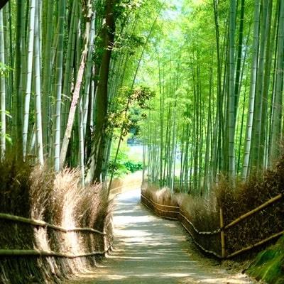 竹林の小径とはどんなところ?