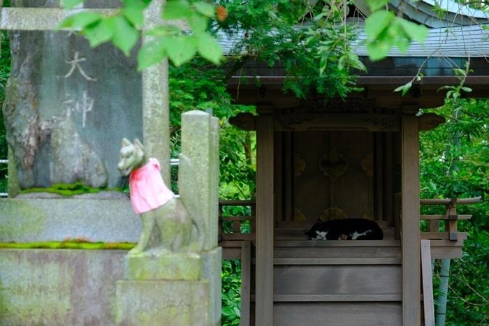 荒木神社のねこ