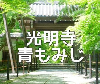 京都・青もみじと苔の撮影スポット・光明寺