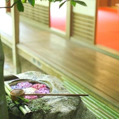柳谷観音の紫陽花