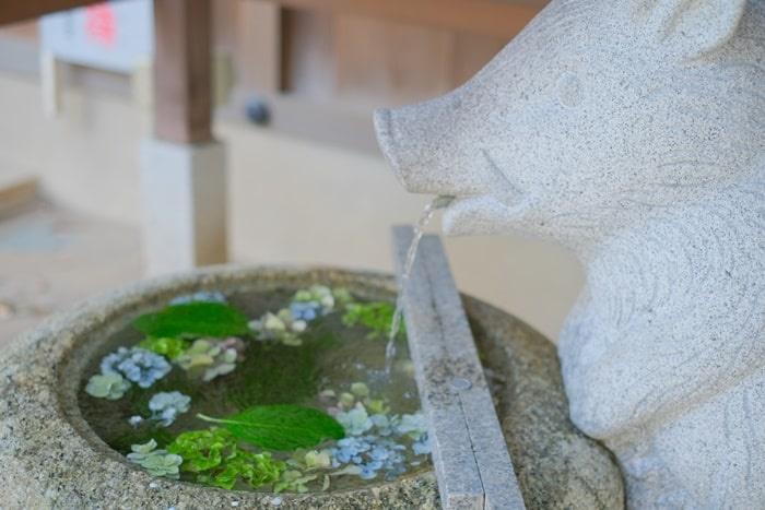 護王神社の花手水・手水鉢