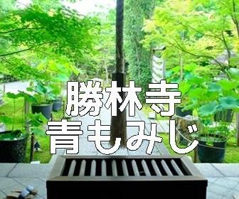 京都・青もみじと苔の撮影スポット・勝林寺