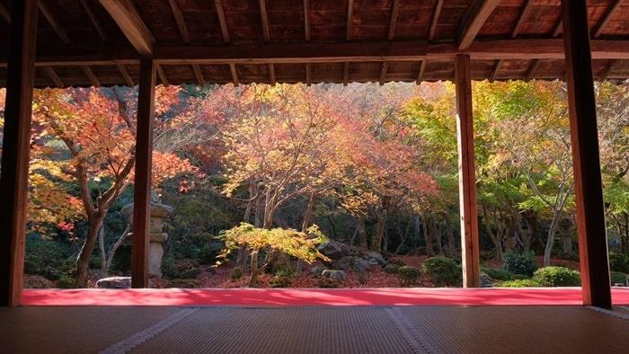 圓光寺 額縁構図 十牛之庭の紅葉