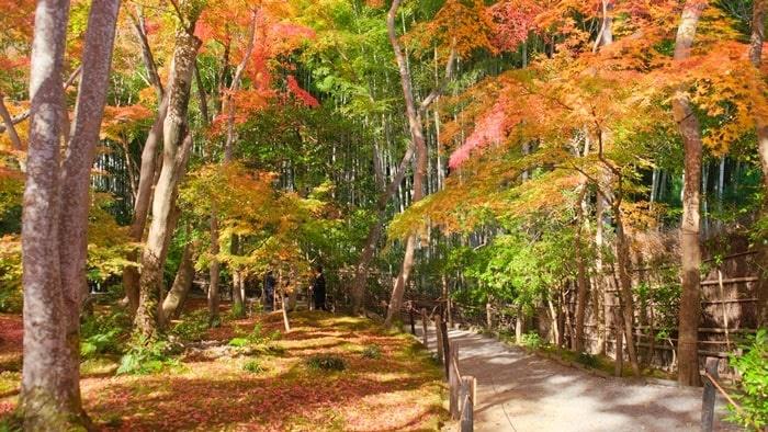 祇王寺の紅葉と竹林
