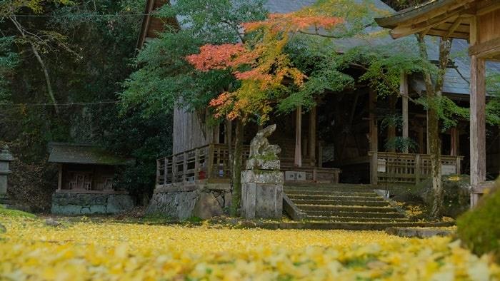 岩戸落葉神社 銀杏のじゅうたん
