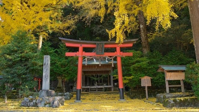 岩戸落ち葉神社 銀杏と鳥居