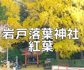 京都・紅葉の撮影スポット 岩戸落葉神社