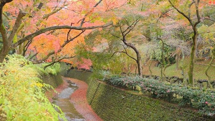 北野天満宮 紙屋川と紅葉