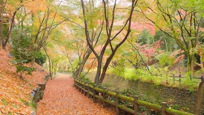 北野天満宮 散り紅葉
