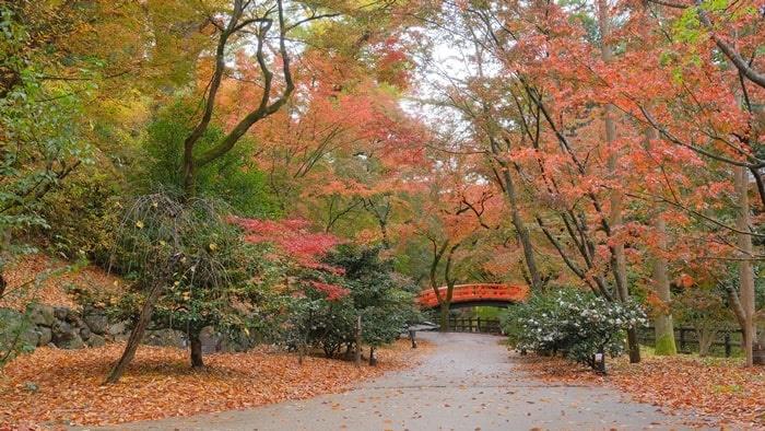 北野天満宮 紅葉と鶯橋