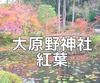 京都・紅葉の撮影スポット 大原野神社
