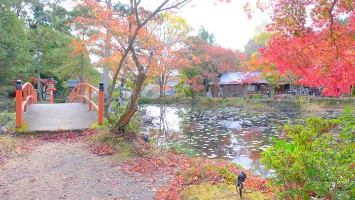 大原野神社 鯉沢池の紅葉