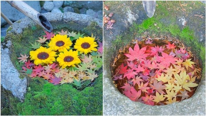 柳谷観音の紅葉シーズン手水鉢