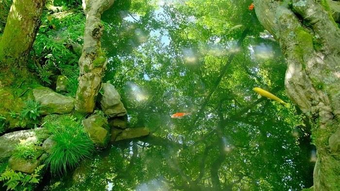 永観堂 池に映る青もみじ